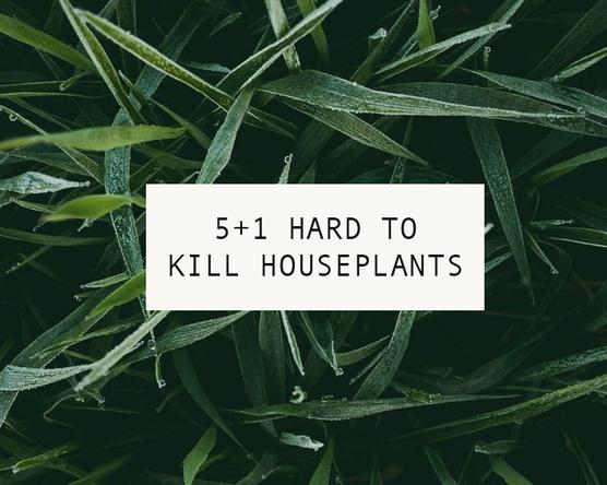 Szobanövények, amik mindent túlélnek!