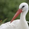 Jobb eséllyel élik túl a telet a szeméttelepeket választó gólyák