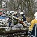 Méretes fa kidőlése okozott gondot Csákváron!