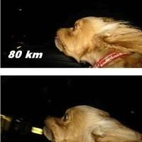 Sebességmérő kutya
