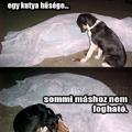 Egy kutya hűsége