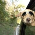 Menő kutya