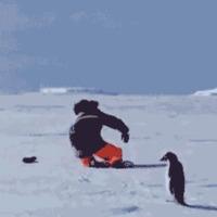 Pingvintámadás!