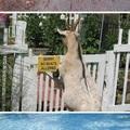Az állatok is lázadnak