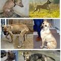 Állatok örökbefogadás előtt és után
