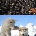 Csodálatos állatfotók
