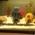 A legmenőbb akvárium