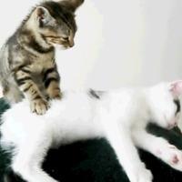 Masszőr cica