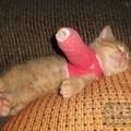 Gipszelt lábú cica