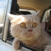 Rémült cica