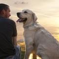 12 előny, amelyért érdemes kutyát tartanod!