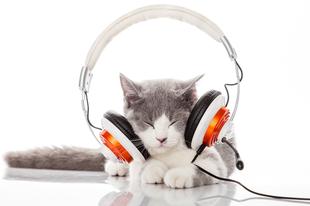 Te milyen zenét hallgatsz? Kedvenc számod személyiségedről árulkodik.