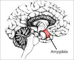"""Képtalálat a következőre: """"profanity brain"""""""