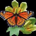 Ferenczy Klára: Táncoló pillangók
