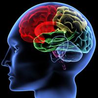 A józanság segít helyrehozni az alkoholizmus által okozott idegrendszeri károkat