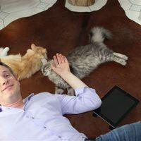 Ugorj cica az iPad-re