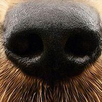 szinkronhangok: egy kutya négy élete