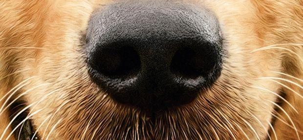 dogs_purpose_kiskep.jpg