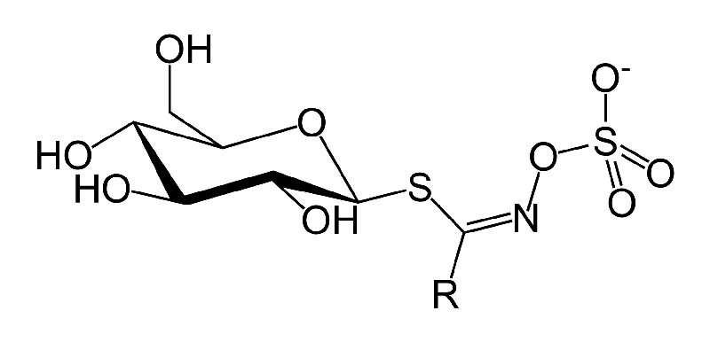 glucosinolate-skeletal.png