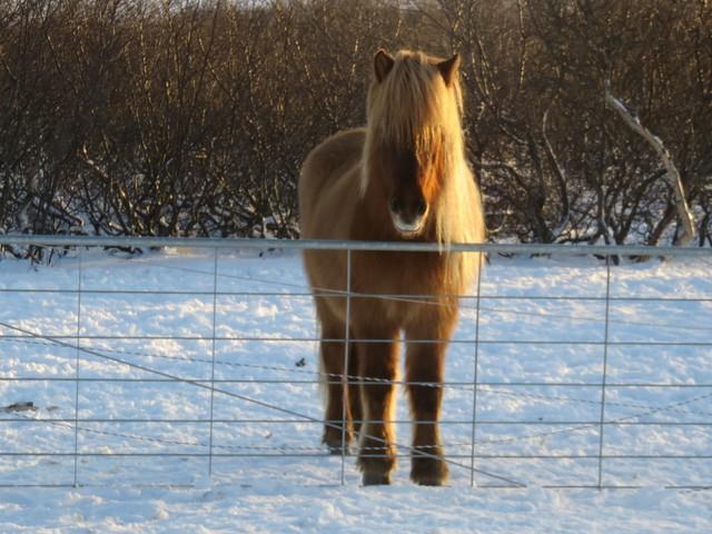 15 érdekes tény Izlandról