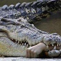 Krokodilsejtés Bajorországban