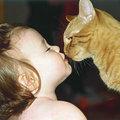 Kutya, macska az allergia ellenszere