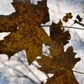 Késő őszi erdő