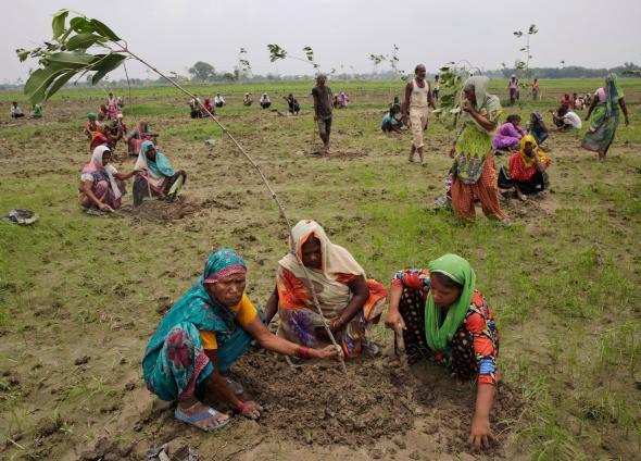 01_tree_planting_india_adapt_590_1.jpg