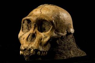 Új vizsgálat adta meg a választ az evolúció legvitatottabb kérdéseire