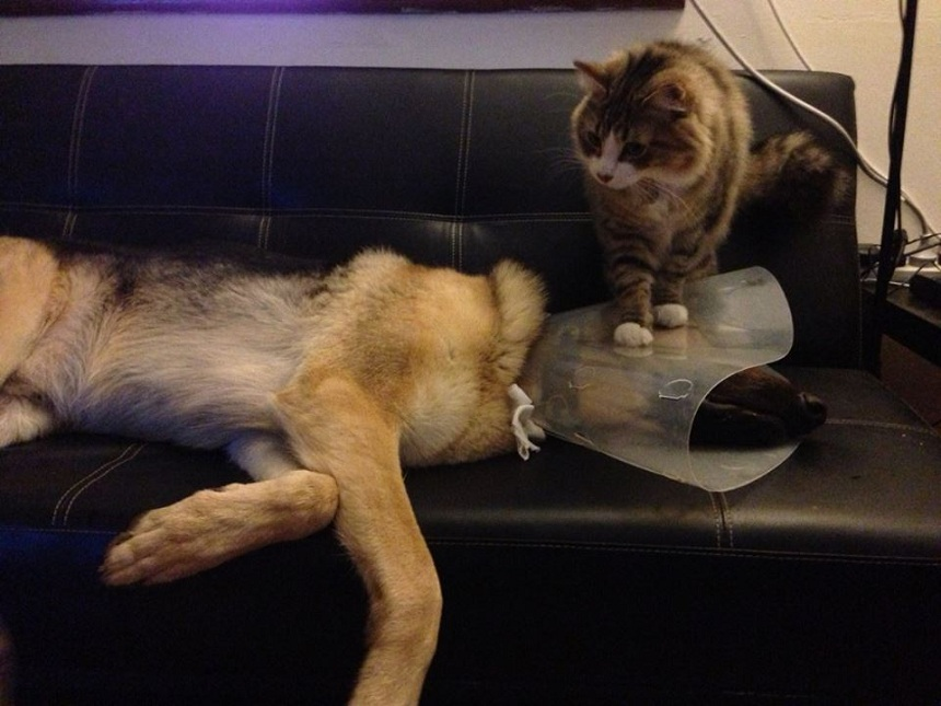 dog-in-cone-collar-and-cat.jpg