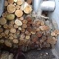 Megázott a fa! Mi a teendő? 1.rész