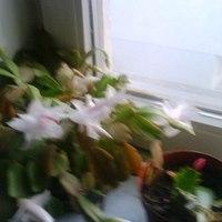 Virágok között virág