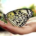 Nyitott kézzel szeretni....