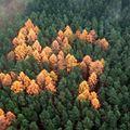 Titokzatos horogkereszt az erdőben