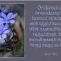 Húsvét u. 3.