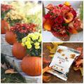 Itt van az ősz…