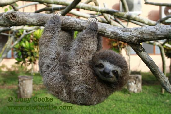 sloths.jpg