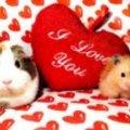 Valentin nap, én így szeretlek
