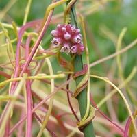 Ezek a növényneveink egyben keresztneveink is