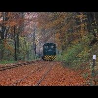 Erdei vasút az őszben