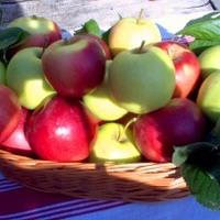 A tiltott gyümölcs - Sült oldalas, almás, párolt lila káposztával