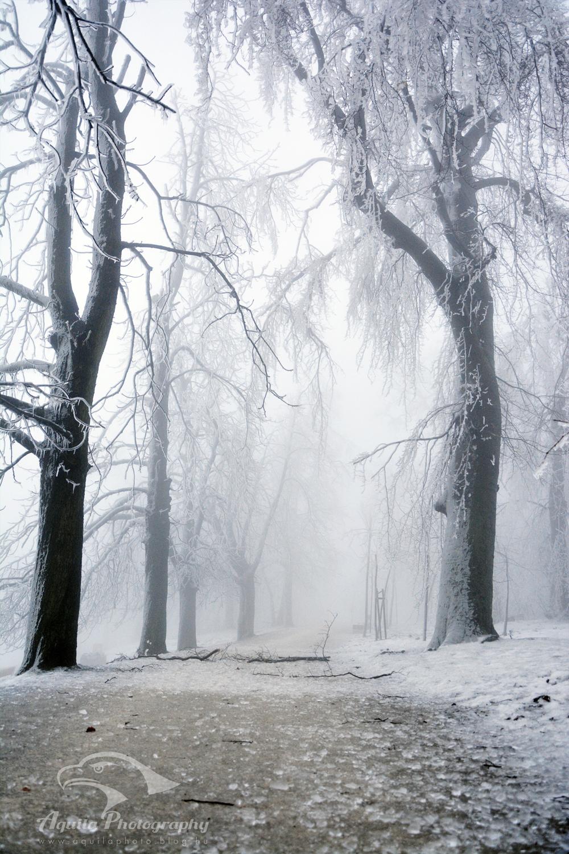 Jégkorszak a Normafán
