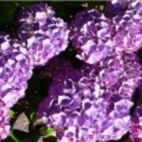 a fény tettei: lila