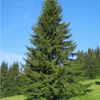 az isten fája