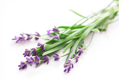 lavender-isp_1.jpg