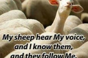 Jehova Tanúi és a kuruzslás