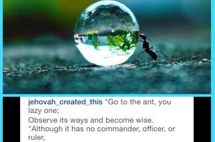 Z, a hangya, Alvirág blogjáról, 2015-ből