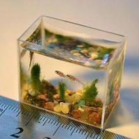 A világ legkisebb akváriuma: 10 ml