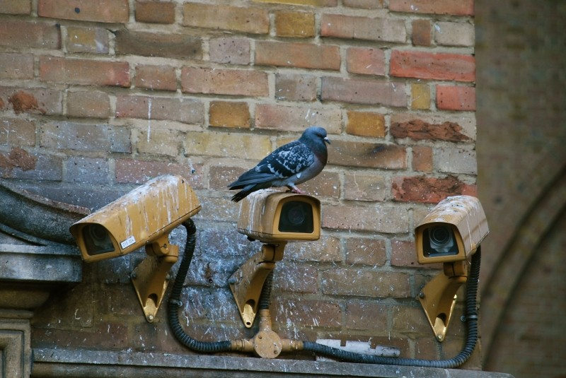 camera-spy-pigeon-surveillance-security-video_1.jpg