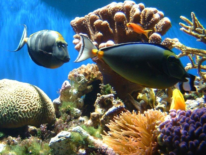 971123_coral-reef-fish_p.jpg